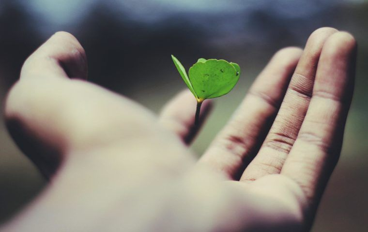 Image of a hand holding a small green shoot