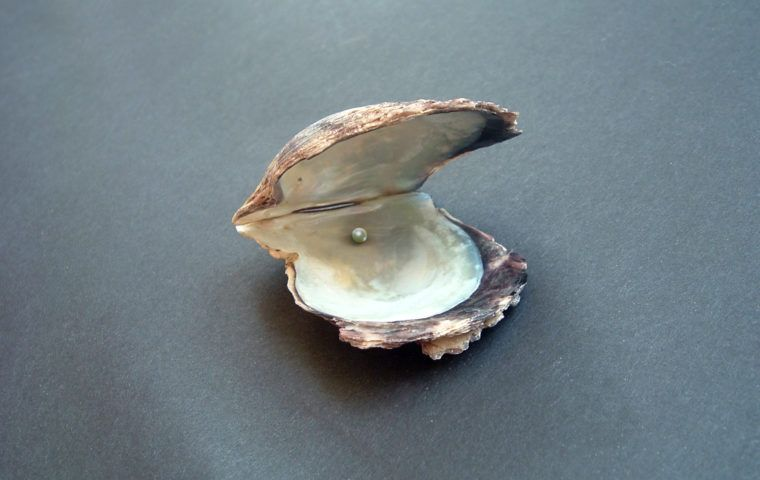 Oyster 1426467